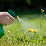 Id your weeds and purchase the best weed killer
