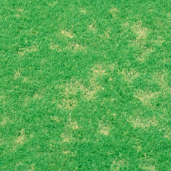 Dollar Spot